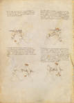 MS M.383 16v.png