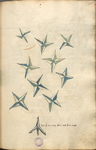 MS B.26 096r.png